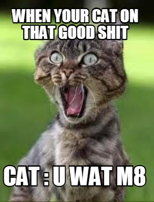 Meme Creator When Your Cat On That Good Shit Cat U Wat M8